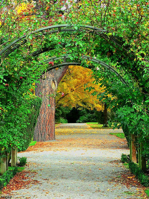 35 best images about canterbury and christchurch new for Landscape gardeners christchurch
