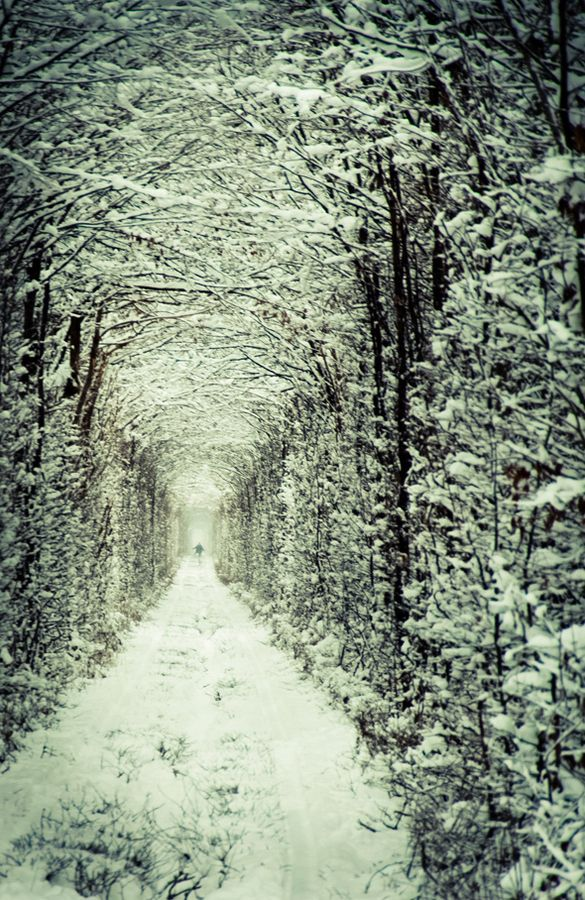 Tunnel of Love in winter, Ukraine