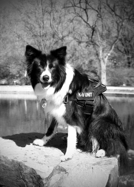 Sage was 2 years old when she began serving her country. Just a few weeks after training, Sage was sent to work in the 9/11 aftermath at the Pentagon. She was later deployed to Iraq. After Sage died, a foundation was formed in honor of her heroism.