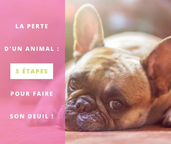 La perte d'un animal, 5 étapes pour faire son deuil. #chat #chien #animaux #deuil