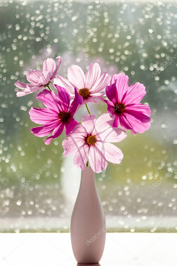 A Bouquet Of Summer Cosmos Flowers In A Vase Pink Cosmea Flowers In The Rays Of Ad Cosmos Flowe In 2020 Cosmos Flowers Container Flowers August Wedding Flowers