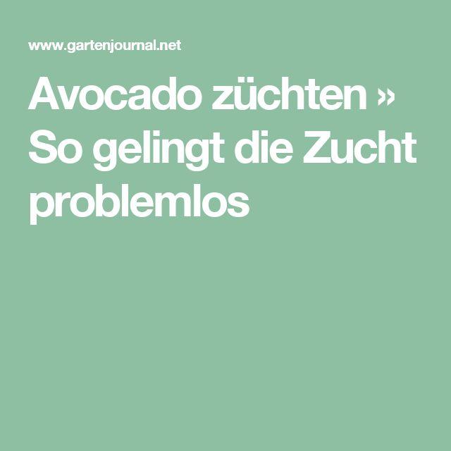 Avocado züchten » So gelingt die Zucht problemlos