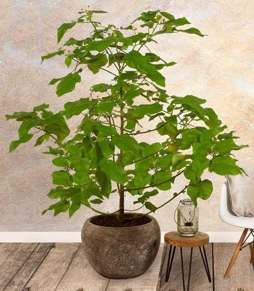 Exclusieve kamerplanten en plantenpotten | Chicplants