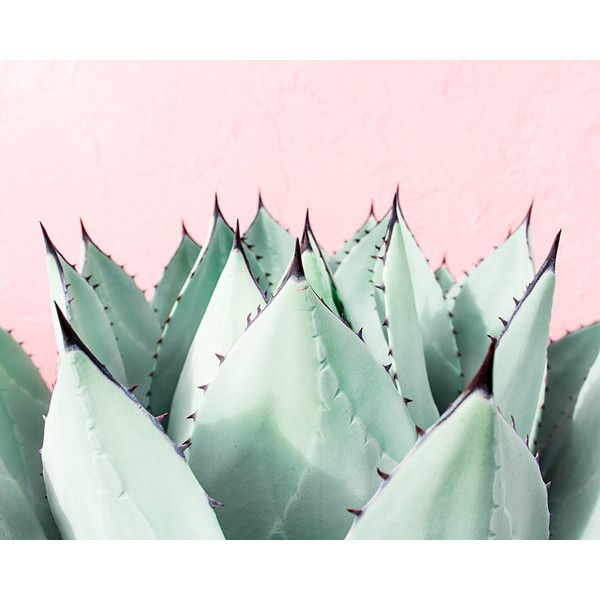 Succulent Plant Print, Nature Photography, Southwest Decor, Green Wall... (£24) ❤ liked on Polyvore featuring home, home decor, wall art, pictures, backgrounds, photo, southwest home decor, green home accessories, photo wall art and photographic wall art