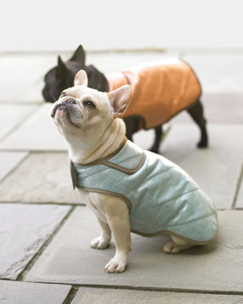 Coated linen lends a sheen to these coats and also makes them water-resistant. A fleece fabric lining makes them warm. The coats are sized for small dogs, about 13 inches in length from neck to tail. The coats shown here are blue with gray trim and orange with brown trim. They're both lined in brown fleece