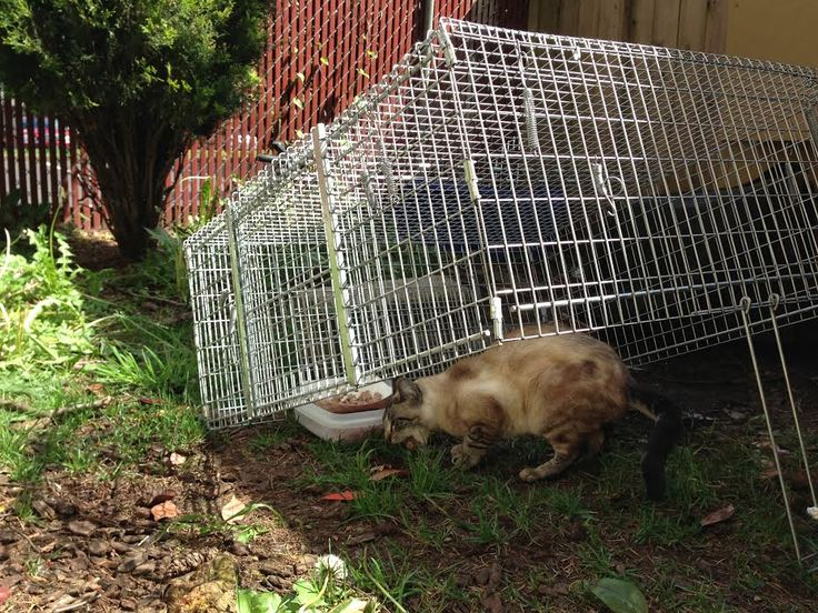 Best Food To Trap Feral Cats