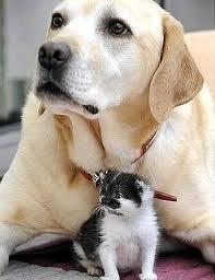 cane protegge gatto..