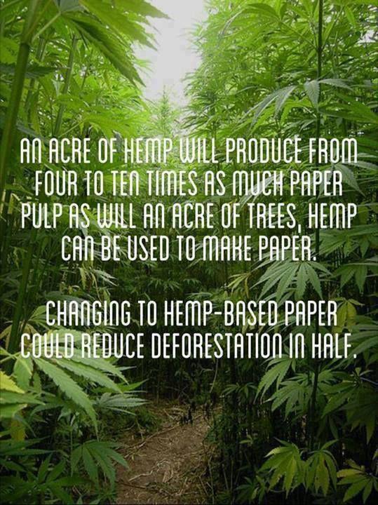 college essays college application essays deforestation paper deforestation paper