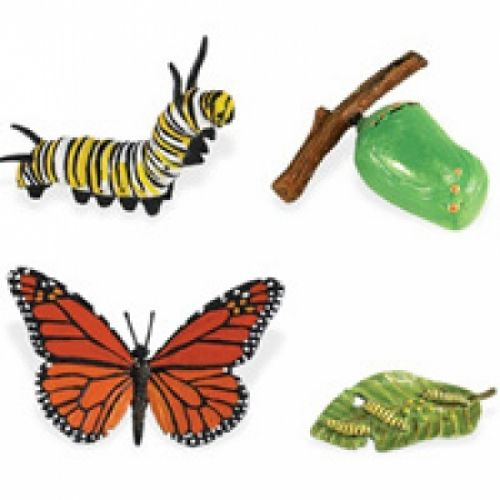 Monarch Butterfly Life Cycle Stage Figures: Butterfly Life Cycle - Life Cycle Figurines