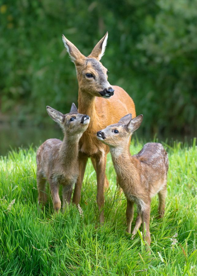 Mother S Love By Filip Stefaniak Deer Animal Doe Animals