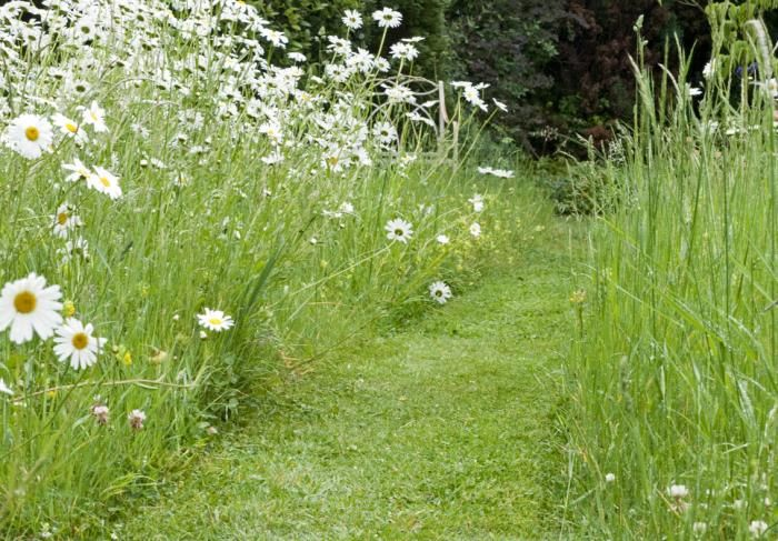 Let grass grow long and cut a path through it. Photo by Nigel Colborn
