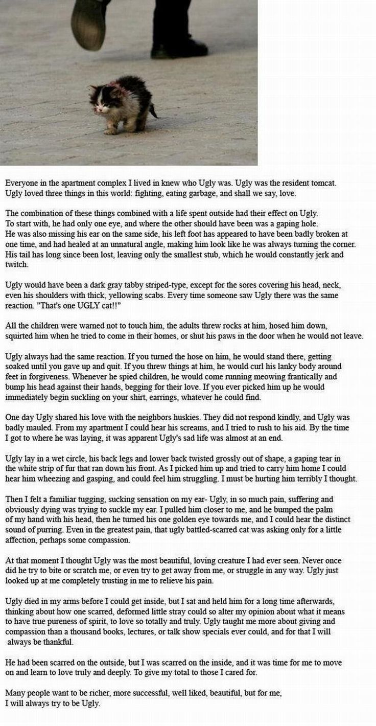 Ugly the Cat! Don't read this unless you are prepared to cry!!!!!