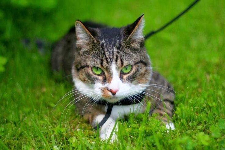 Ошейник от блох и клещей для кошек: как правильно выбрать