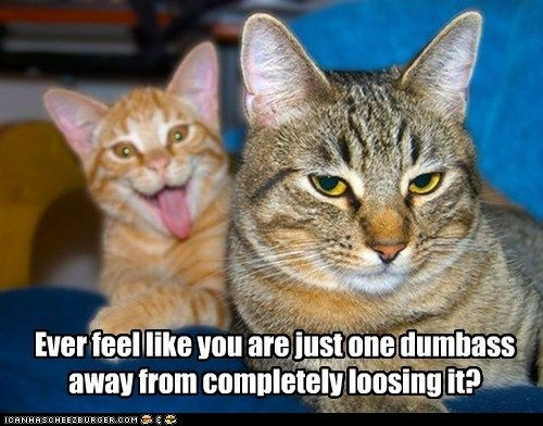 Every. Single. Day.: Photos Bombs, Friends, The Face, Funny Pictures, Funny Cat, Crazy Cat, Families Pics, Funny Animal, Cat Meme