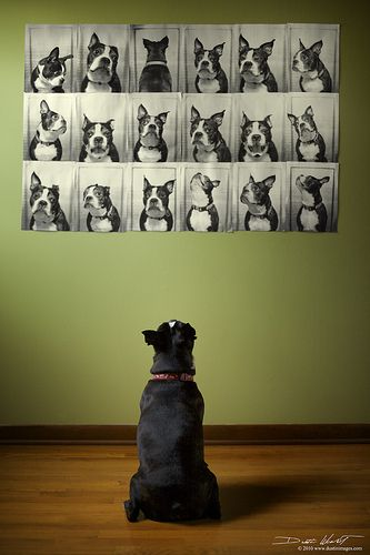 The Many Faces of Otto - DIY for your own dog | Justin Weant