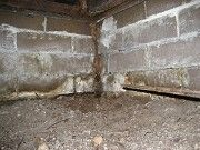 Termite Control in Brisbane can Produce Effective Results : It is very irritating to share the premises with the termites. They can create sanitation problems and lead to the creation of diseases too. Hence it is important o keep the termites at bay.