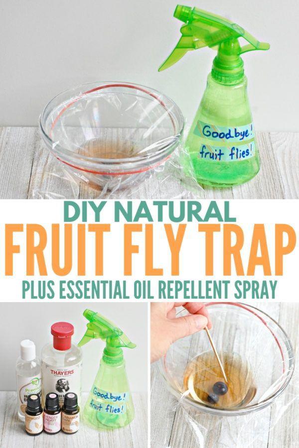 Diy Natural Fruit Fly Trap Essential Oil Spray Living Well Mom Recipe Fruit Fly Trap Fruit Flies Fruit Fly Spray