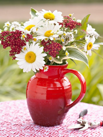 Country Sun Power-Capture the sun with white-and-yellow Shasta daisies, and echo it with daisy fleabane. Red yarrow completes the country look by picking up on the colorful pitcher and gingham tablecloth.