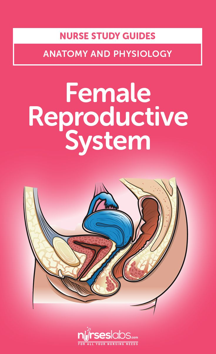 Female Reproductive System: Anatomy and Physiology