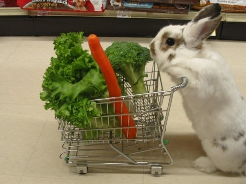 just a typical day for mr. rabbit, just going out and buying some healthy groceries.
