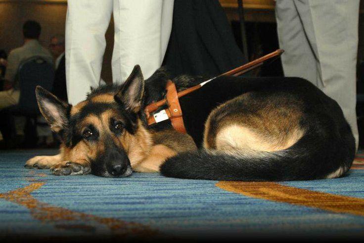 Service Dogs Site Washingtonpost Com
