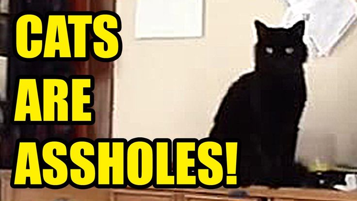 CATS ARE ASSHOLES! 2015 Funny Cats Compilation