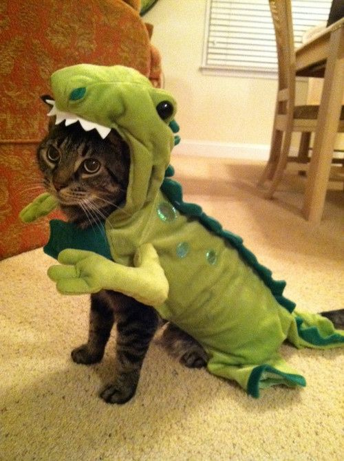 """""""What's wrong with just dressing up and having fun?"""" 