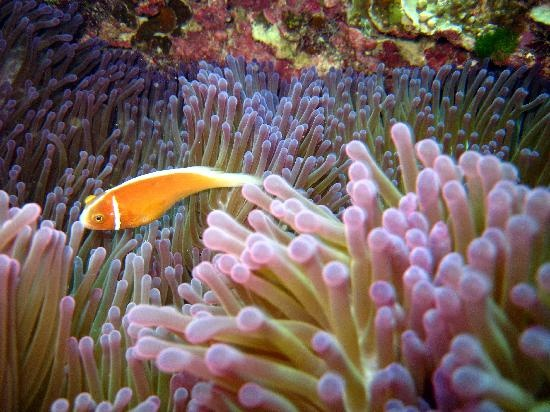 Wavelength Reef Charters: Fish and coral - beautiful #Australia http://www.tripadvisor.com.au/ShowForum-g255067-i460-Queensland.html