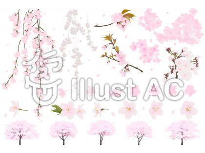 オリジナルのフリー素材リアル桜セットイラスト桜 枝垂れ桜 花