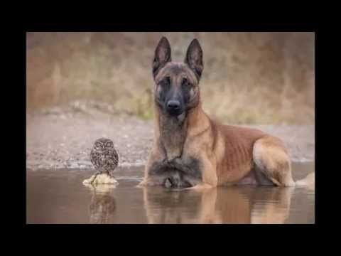 Friendship Dog and Owls