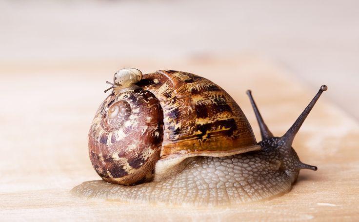 Een aantal natuurlijk tips om slakken te bestrijden of te vermijden > In het spoor van de slak