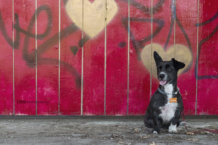 kutyafotózás #kutyafotózás dog photography budapest #dogphotography #dogphotographybudapest #kutyafoto #kutyafotó #kutyaportré #zséelphotography