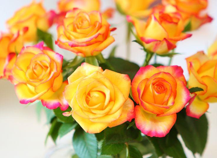 CLOSE - UP <3 Bos vlammend oranje rozen