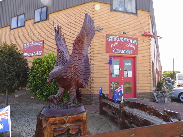 One Mother Hen: Ant's Redgum Gallery