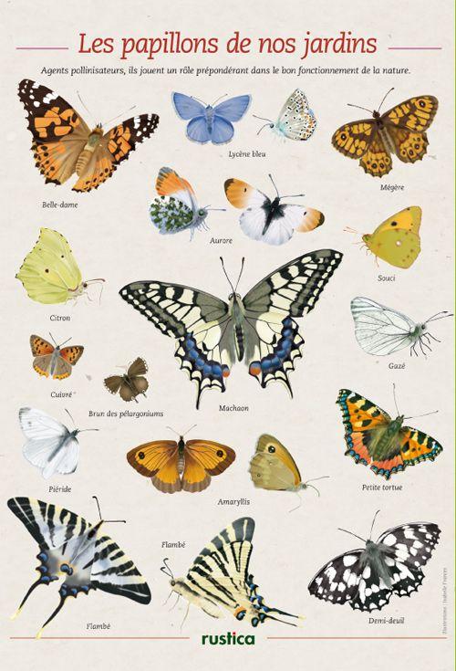 Les papillons des jardins de France - Illustrations : Isabelle Francès - Rustica pour Votre Maison Votre Jardin