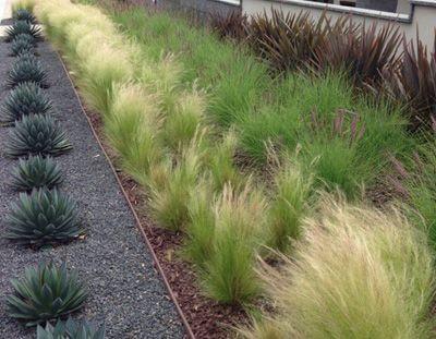 17 best images about tuinen on pinterest gardens front for Short ornamental grasses full sun