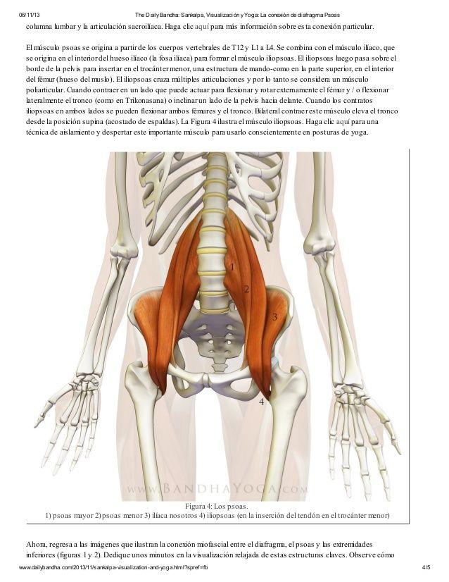 Mejores 18 imágenes de diafragma en Pinterest | Cuerpo humano ...