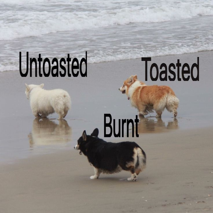 I like the toasted one