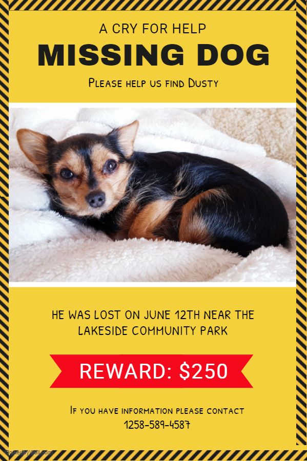 Missing Pet Poster Yellow Dog Poster Losing A Dog Losing A Pet