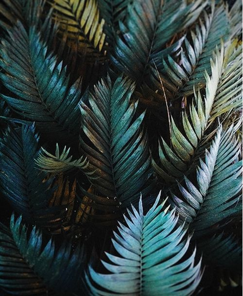 The texture of these tropical leaves has us dreaming of warm weather and cool drinks.