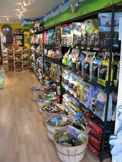 The Truth About Pet Food: Bad Ingredients