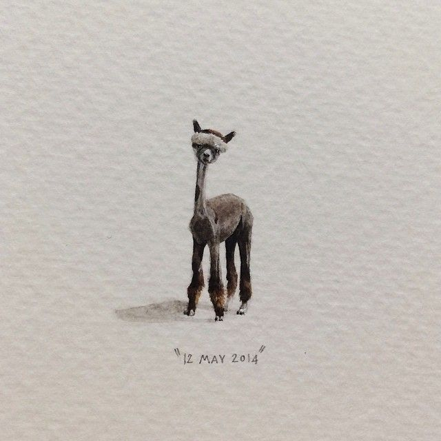 Day 132 : Here's a shaved alpaca to counteract the Monday Blues. (OK so I admit, alpaca's aren't actually FROM Cape Town, but there are more than 50 registered breeders in South Africa, and one of those - Mukuti Stud - first encountered alpacas on a small holding outside Cape Town). 10 x 23 mm. #365postcardsforants #miniature #watercolour #wdc624 #shavedalpaca #alpaca