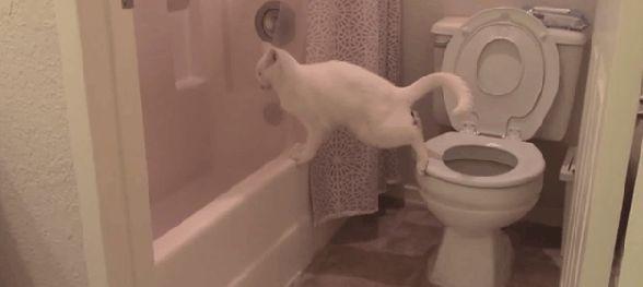 Bathroom Cat Poop.gif