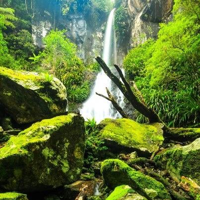 OReilly's rainforest......Queensland, Australia