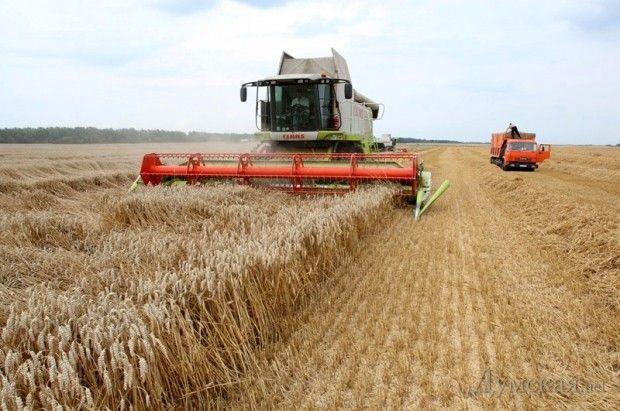 Глобальное потепление: уборка зерновых вОдесской области начнется раньше…
