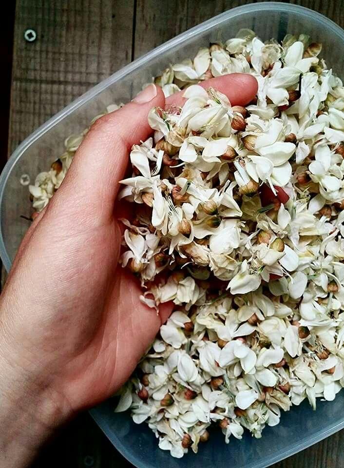 Ieri abbiamo raccolto i fiori di Robinia (conosciuta come acacia). Ora li faccio essicare all' aria aperta, poi li userò per ottime tisane o preparazioni culinarie. Per infuso utilizzate un cucchiaino di fiori essicati per tazza. Sapete che sono davvero un toccasana per molti disturbi? Utili per aumentare i livelli del colesterolo buono,  come depurativo e disintossicante, per attenuare le eruzioni cutanee, per lenire il sistema digestivo, ridurre le infiammazioni, per le malattie delle vie…