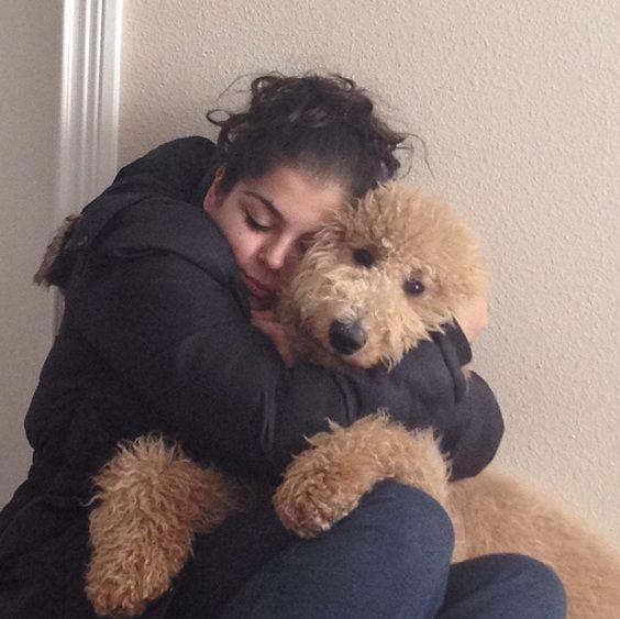 Resultado de imagen para poodle toy being hugged