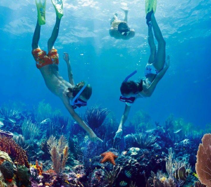 bleue à dos de scooter des mers, plonger à la découverte des coraux et des éponges, voir le vent s'engouffrer dans sa voile sous un ciel sans tâche, tout apprendre de la réserve naturelle du Grand Cul-de-sac marin, partir en catamaran à la recherche des bancs de sable blanc... Tout est permis dans l'eau, et l'on s'y sent si bien ! Détente, ivresse, liberté, bien-être... On dira de vos photos qu'elles sont retouchées et du récit de vos vacances qu'il est exagéré.