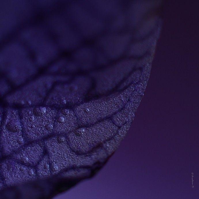 die besten 17 bilder zu purple auf pinterest, Hause ideen