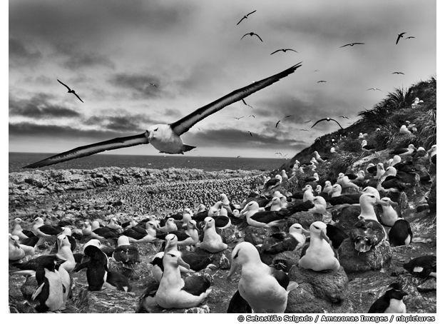 Steeple Jason Island, Brazilian social documentary photographer and photojournalist Sebastião Salgado